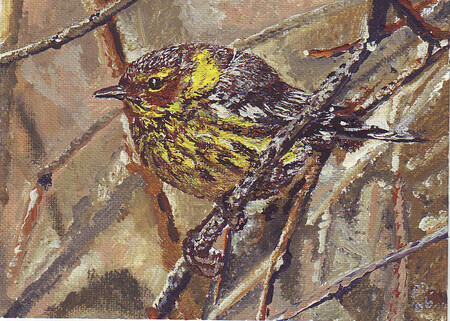 Cape May Warbler 7x5