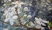 CHERRY BLOSSOMS 41x24