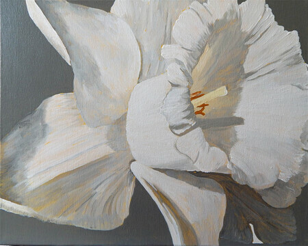Daffodil in Grey 20x16