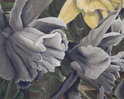 Ode to Daffodils 30x24